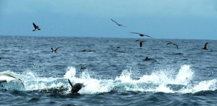 Proteção para 475 espécies aquáticas ameaçadas de extinção