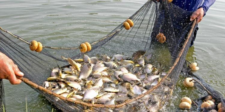 Tocantins Adere a cota zero a pesca e transporte de pescado