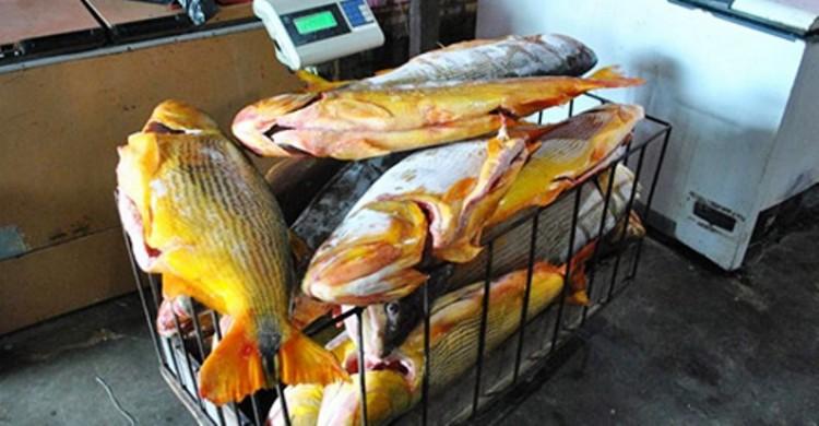 Ayolas: ex-referência no turismo vira mercado de peixes