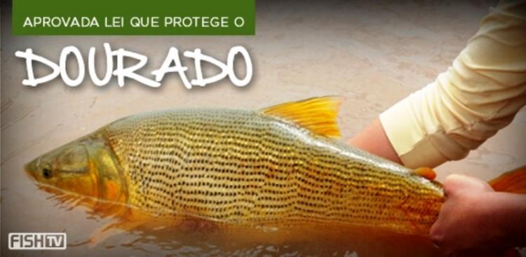 Aprovada lei que protege o dourado em Aquidauana - MS