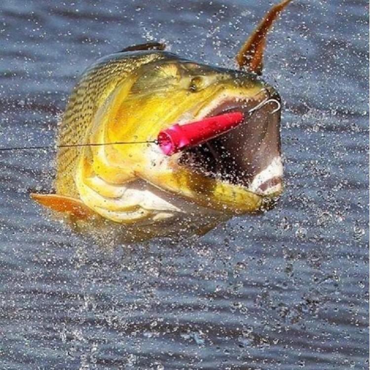 Dicas de como obter uma pescaria com melhor desempenho e sucesso
