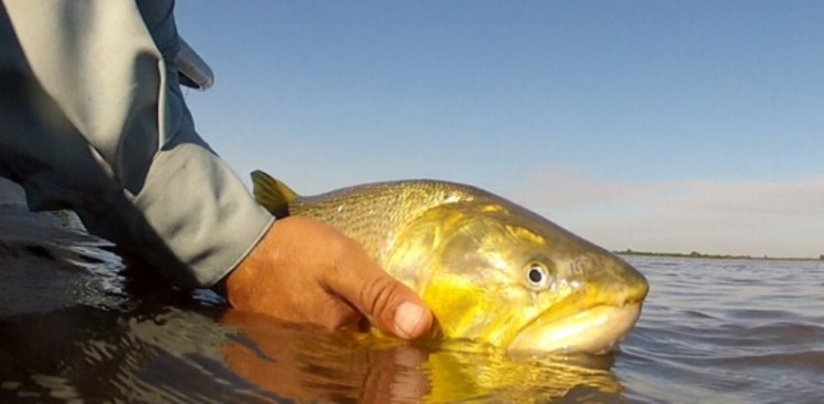 Mato Grosso pode proibir o transporte de peixes por pescadores amadores