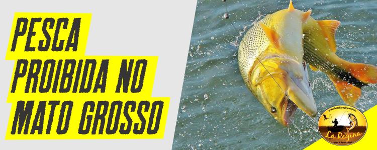 Proibição da pesca em Mato Grosso: 11 rios estão liberados
