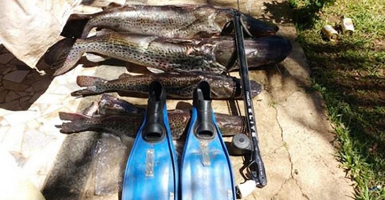 Pescadores subaquáticos matam 93 kg de pintados no Rio Paraná